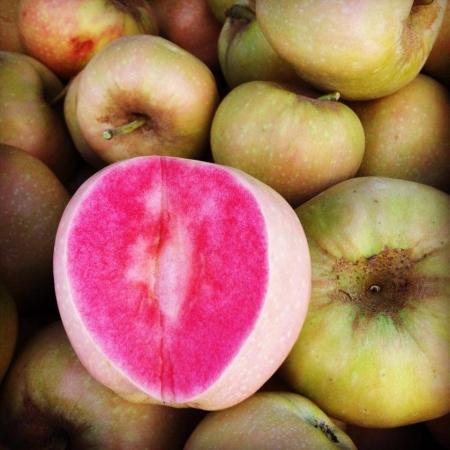 "Яблоня ""Pink Pearl"" (Розовая жемчужина, Пинк перл)"