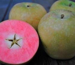 """Яблоня розовомясая """"Хиден роуз"""""""